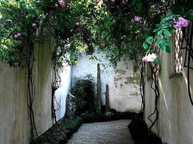 花木庭院,花木围墙,私家庭院设计