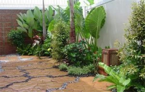 庭院独葱茏,生机勃勃的花木庭院,私家庭院设计